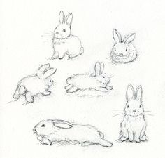 Adorable Art: Learn How to Paint a Beautiful Bunny how to draw a bunny - Drawing Tips Adorable Art: Learn How To Paint A Beautiful Bunny Animal Sketches, Drawing Sketches, Art Drawings, Drawing Tips, Bunny Sketches, Drawing Techniques, Pencil Drawings, Baby Animal Drawings, Pencil Sketching