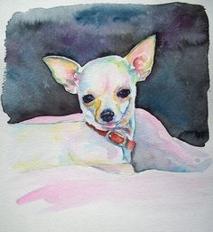 8 x 10 Chihuahua original watercolor painting - $50. Painted on high quality cold press watercolor paper. Email me for details! info@christystudios.com:
