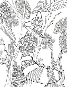 Amazon.com: Animal Creations Coloring Book: Inspired By Nature (9780692585412): Cindy Elsharouni: Books