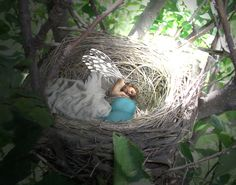 I want a faery nest to care for