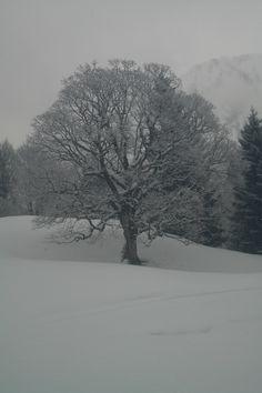 Baum im Winter, Hochleite
