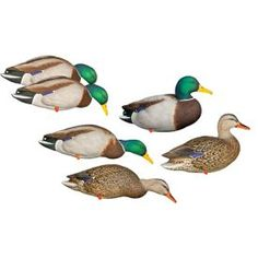 6 X STORM FRONT Mallard DUCK decoys on Stands for Wildfowling Hunting Magnum