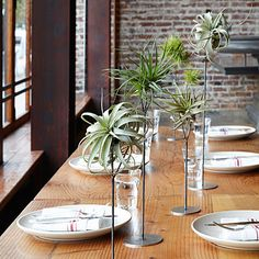 Use perches to cradle tillandsias for an unusual holiday tabletop display. #airplants