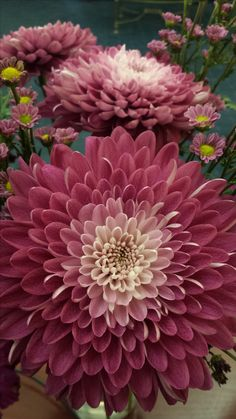 Dahlia - Love this color