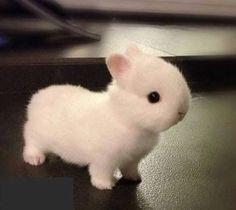 Baby Dwarf rabbit!!! Sooooooo cutttteeeeee!!!!