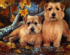 """Norfolk Terrier """"Forrest Romp"""" a limited Edition Print by Martha Van Loan. Signed and serially numbered. Image size is 11""""x14"""" order from the artists website www.vanloanstudios.com"""
