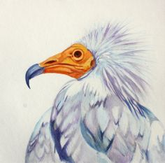 Water colour Bird painting. Egyptian Vulture Bird Paintings, Vulture, Watercolor Bird, Egyptian, Fine Art, Colour, Animals, Paintings Of Birds, Color