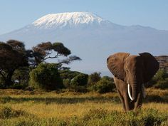 Africa | Lone elephant with Mount Kilimanjaro in the background. | © Steven Pollack