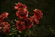 Y como tenía ganas de pintar, eligió unas rosas y comenzó a editar...