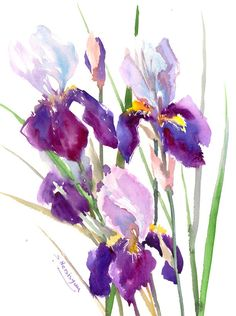 Irises Painting, original watercolor painting, 12 X 15 in, garden irises, iris flowers, iris design floral design mothers day by ORIGINALONLY on Etsy