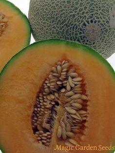 Tropische Pflanzensamen: Cantaloupe Zuckermelone 'Altai' (Cucumis melo) - Samen von  Magic Garden Seeds