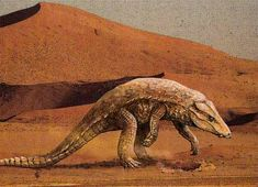 Armadillosuchus, a crocodyliform which lived in the late cretaceous period. Armadillosuchus and the family it belongs to, Sphagesaurid, were very mammal-like. Armadillosuchus is believed to be not only terrestrial, but possibly have a fossorial lifestyle.