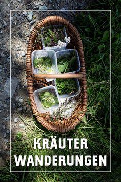 Kräuterwanderungen in Tirol Kraut, Austria, Bergen, Holiday, Blog, Summer Vacations, Family Vacations, Tourism, Mountain Climbing