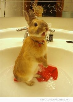 How'd the bunny get in the sink?