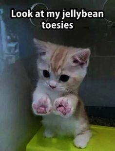Wholesome Collection of Adorable Kitten Memes - 20 Adorable Kittens That Just W. - Wholesome Collection of Adorable Kitten Memes – 20 Adorable Kittens That Just Want To Make You S - Funny Animal Jokes, Funny Cat Memes, Cute Funny Animals, Funny Humor, Cats Humor, Funny Pics, Cute Pics, Funny Cute Cats, Funny Cat Pictures