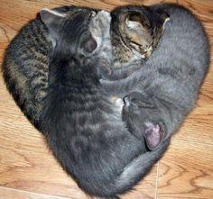 Kitty ♥