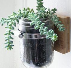 pots de fleurs à accrocher au mur: succulentes en verrerie
