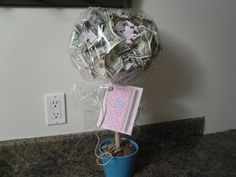 Poppies at Play: The Money Tree..
