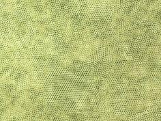 Andover Fabrics - Gail Kessler 'Dimples' Bildgröße 20 cm x 15 cm dim-030-04-G https://planet-patchwork.de/de/article/qp/29146/1/