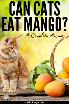 Can Cats Eat Mango? A Complete Answer - CatLicking