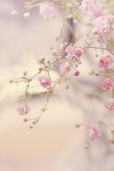 Romantic. Pink Flowers Tree. Wallpaper. iPhone.