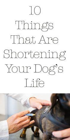 10 Things That Are Shortening Your Dog's Life... Good info to know http://iheartdogs.com/10-things-you-might-not-know-are-shortening-your-dogs-life/