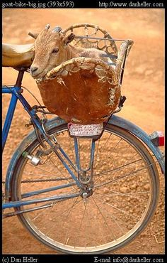 But first I gotta take the goat out for a ride.  Goat Transport, Burkina Faso by Dan Heller