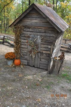 RUSTIC WEATHERED WOOD SHED WITH FALL MUMS, PUMPKIN, CORN STALK, AND DRIED CORN WITH HUSKS ON THE DOOR.