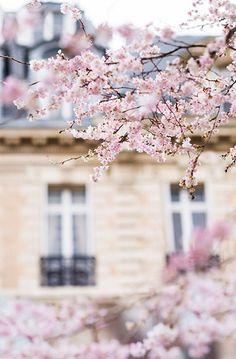 Paris Photograph - Cherry Blossoms
