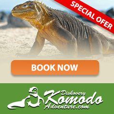 Discovery Komodo Adventure provide Komodo tour package 3Days 2Night will visit :Rinca island Pink Beach,Kanawa Island,manta point,Padar Island and other island