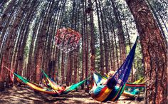 Electric Forest 2013 . Hammock Life