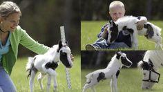 world-smallest-horse.jpg