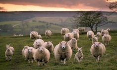 sheep farm by Simon Watkinson on 500px