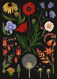 Kate Scott - Botanicum - Wild Flower - 'I like the way the artist chooses to depict the subject, what to include, what to focus on,' Scott says about the vintage illustrations her works recall