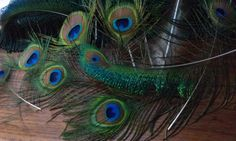 Peacock Feathers Large 3.54inch wide All by CherylsGoodStuff, $4.20
