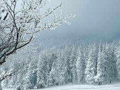 C'est un paysage fantasmagorique, couvert de sapins et de roches volcaniques. Partez en randonnée, aux confins de l'Ardèche et de la Haute-Loire, dans le massif du Mézenc : http://www.geo.fr/voyages/vos-voyages-de-reve/france-massif-central-balade-hivernale-dans-le-massif-du-mezenc
