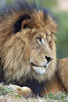 The King Of a The Jungle