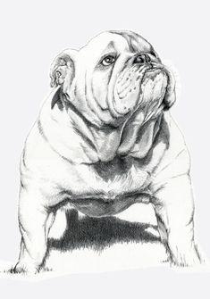 Dogs: Bull Dog Art Print by Ruben Pino