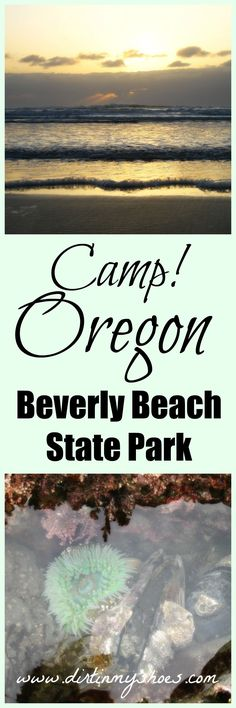 Activities abound on this pristine beach on the Oregon Coast!  Start planning your vacation with this guide to camping on Beverly Beach || Dirt In My Shoes