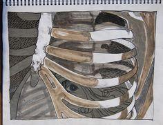 Steph Houstein: Rib studies from journal, 2009