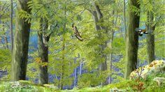 I colori di Conci- Conci's colours: Life in the forest- Sicily Park Agency calendar. Watercolor, gouache and Photoshop