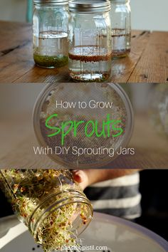 How To Grow Sprouts With Diy Sprouting Jars Growing Your Own Sprouts Is Easy With These Diy Sprouting Jars And A Handful Of Seeds Enjoy Garden Fresh Superfoods With These Easy Tips Hydroponic Farming, Hydroponic Growing, Hydroponics, Permaculture, Growing Sprouts, How To Grow Sprouts, Mustard Plant, Sprouting Seeds, Sprout Recipes