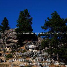 #nature  #rock #landscapephotography #mountain #forest #trees #idaho #amazing #backpacking #adventuretime #outdoor #scenery #nikon #womanphotographer
