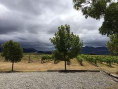 Marlborough New Zealand Winery