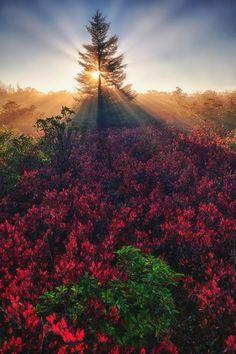 "mstrkrftz: "" Sunray from God by David Nguyen """