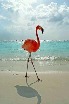Love the cool beach