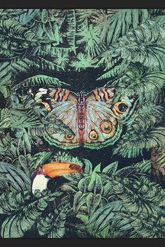 Wild amazon jungle illustration by jonti Baylis  Jontibaylis-art.tumblr.com