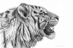 original drawing White Tiger Profile   signed by by schukina, $500.00