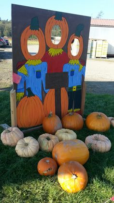 Dugualla Farm Pumpkin Patch and corn maze