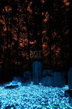 Glow Stones - Max Schneider's Avatar Petrified Forest